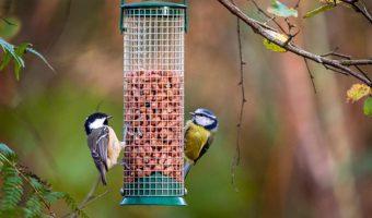 Come attirare gli uccelli nel tuo giardino