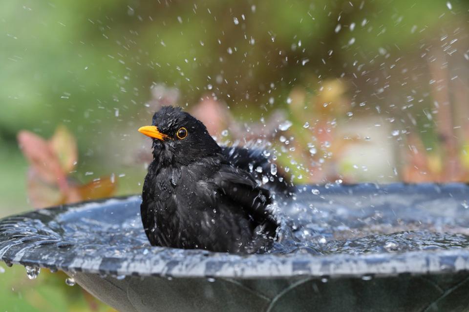 Come attirare gli uccelli nel tuo giardino2