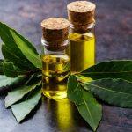 Ricetta olio di alloro