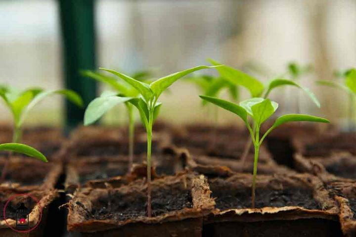 Crea questo fertilizzante naturale con 4 ingredienti